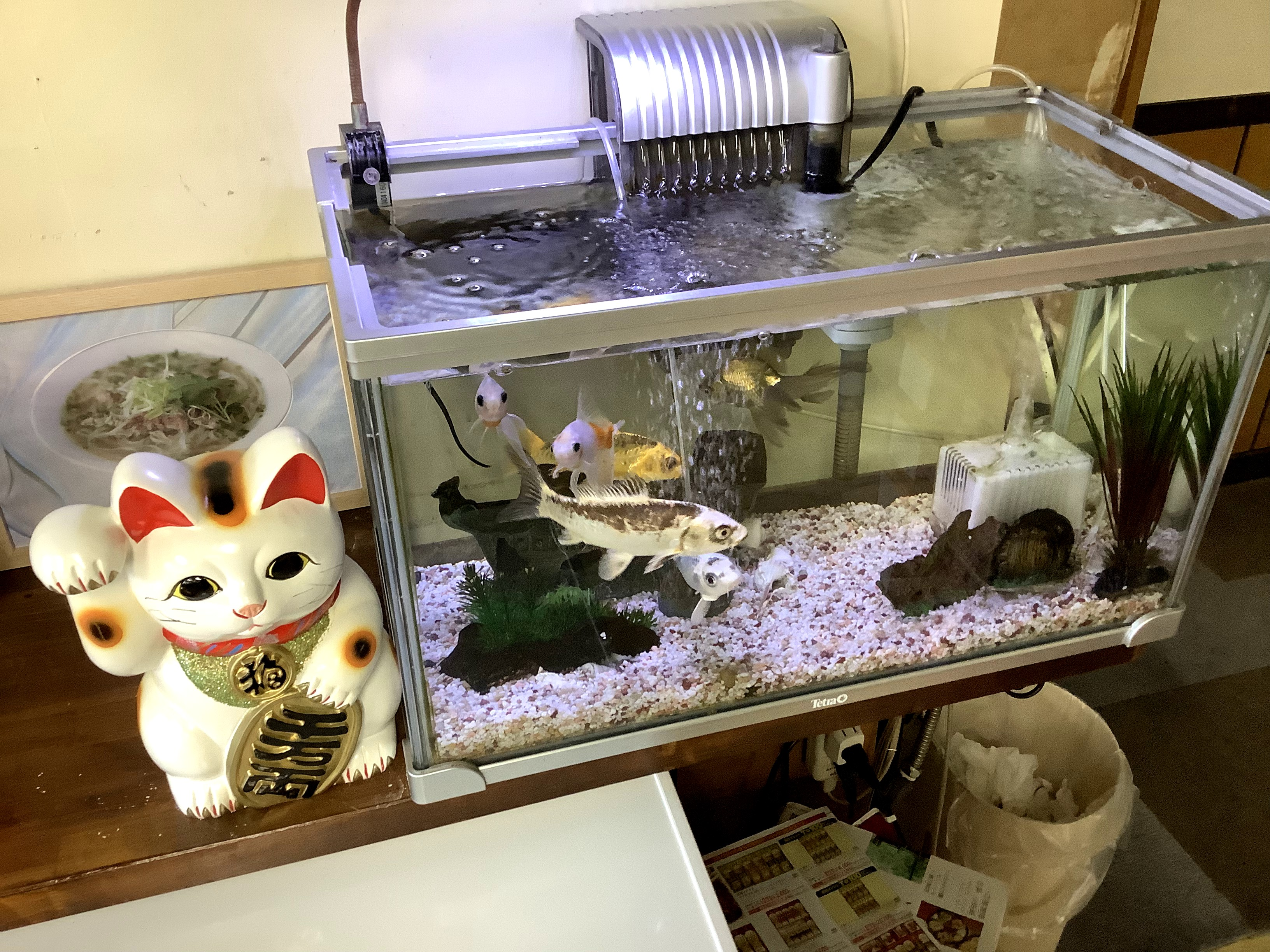 Fish kept in a restaurant