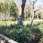 様々な木々や野鳥を観察-仙波河岸史跡公園
