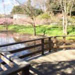 ウッドデッキから湿地帯を望む-仙波河岸史跡公園