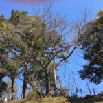 もう少したつと桜がきれいです-仙波河岸史跡公園