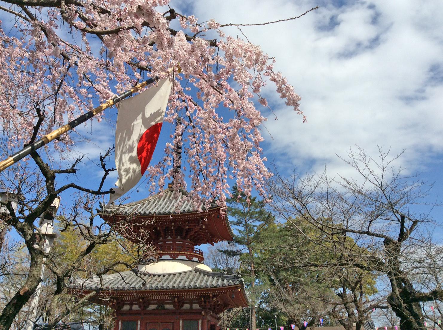 国旗と多宝塔と しだれ桜