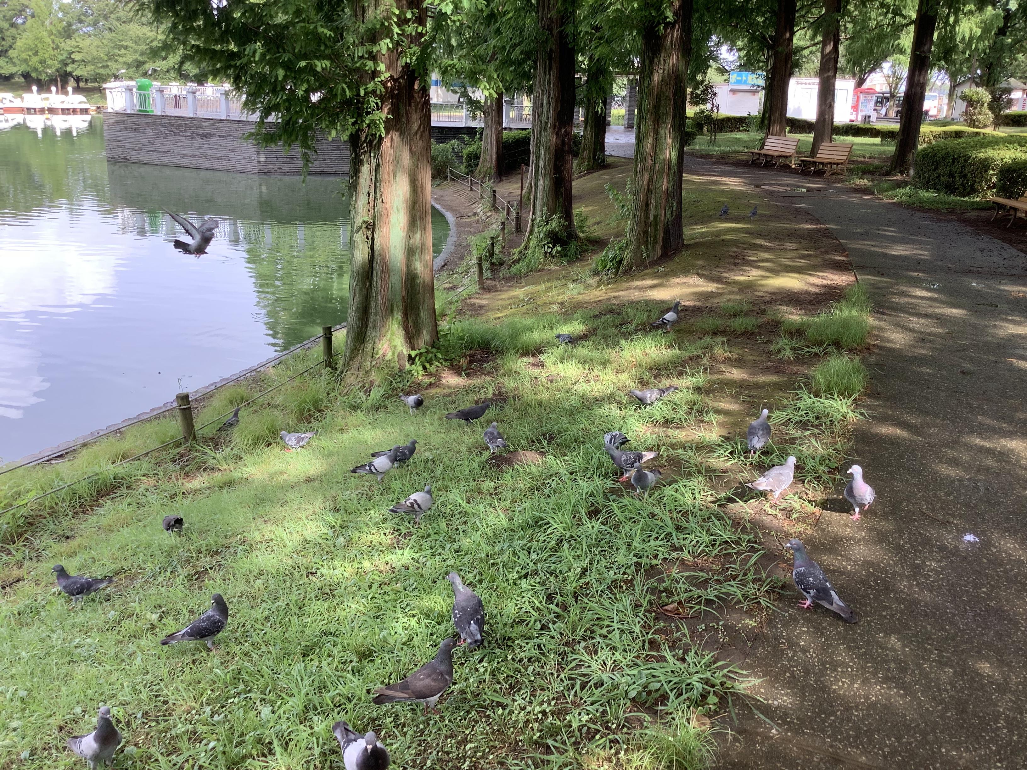 夏の川越水上公園
