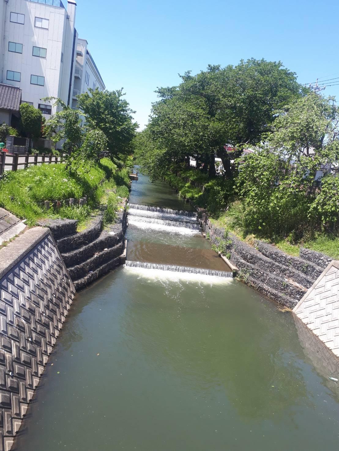 川越氷川神社の裏